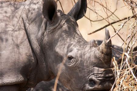 1white_rhino_uganda_240216_01_web.jpg