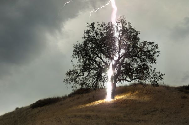 Lightning-tree-detail.jpg