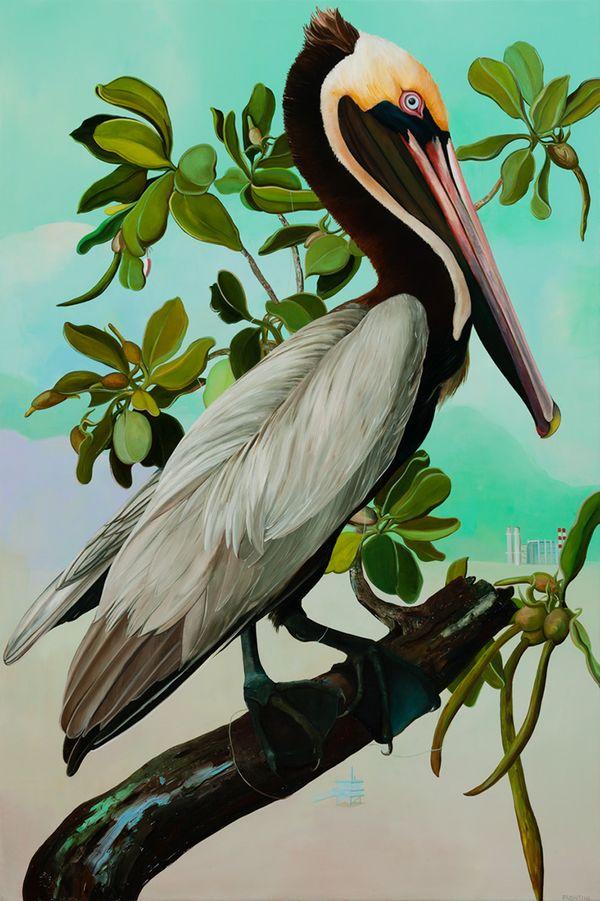 California Brown Pelican (Adult), 2016