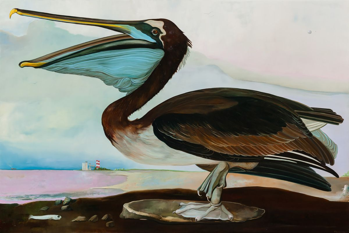 California Brown Pelican (Youth)