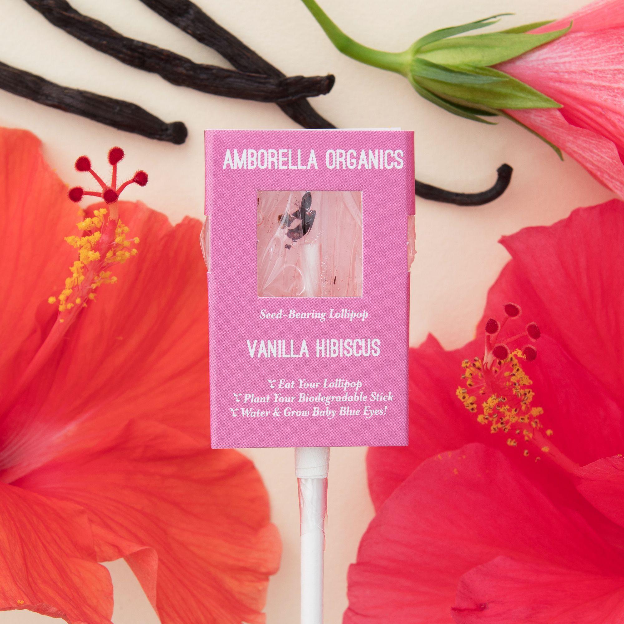 Vanilla Hibiscus 01.jpg