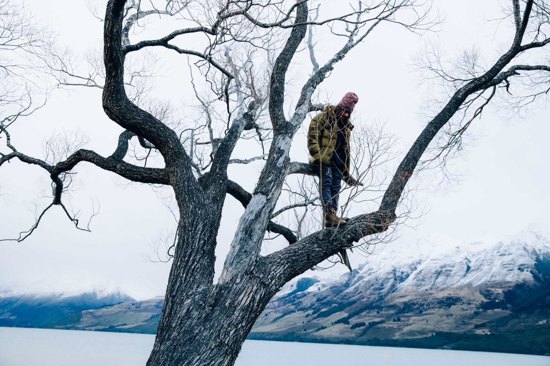 Danny Davis, Tree Climb