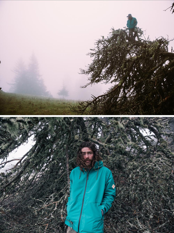 Danny Davis, Wild Tree