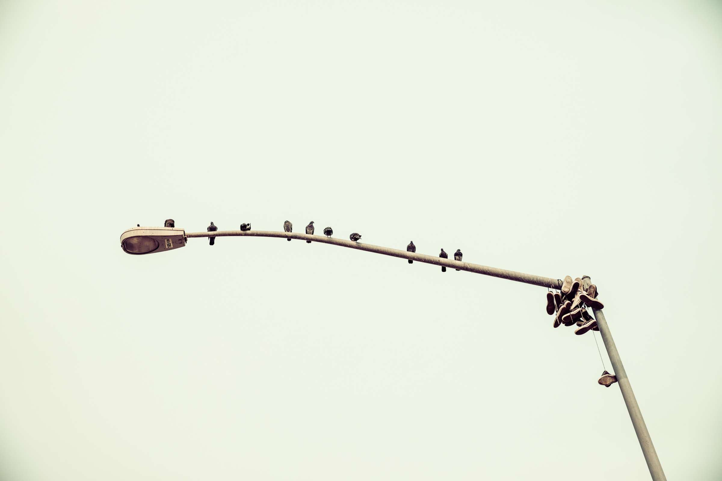 BirdsNShoes - Spy Optics