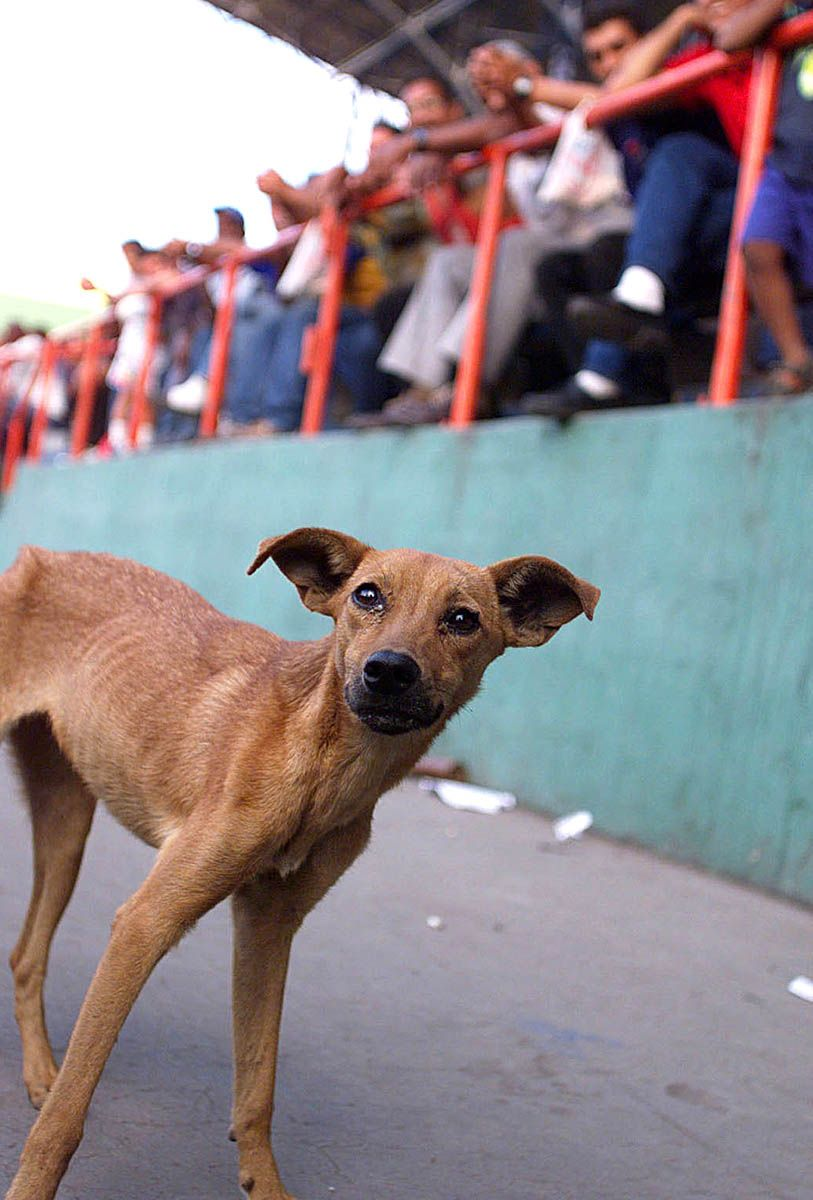 Dog roams stadium in Havana.