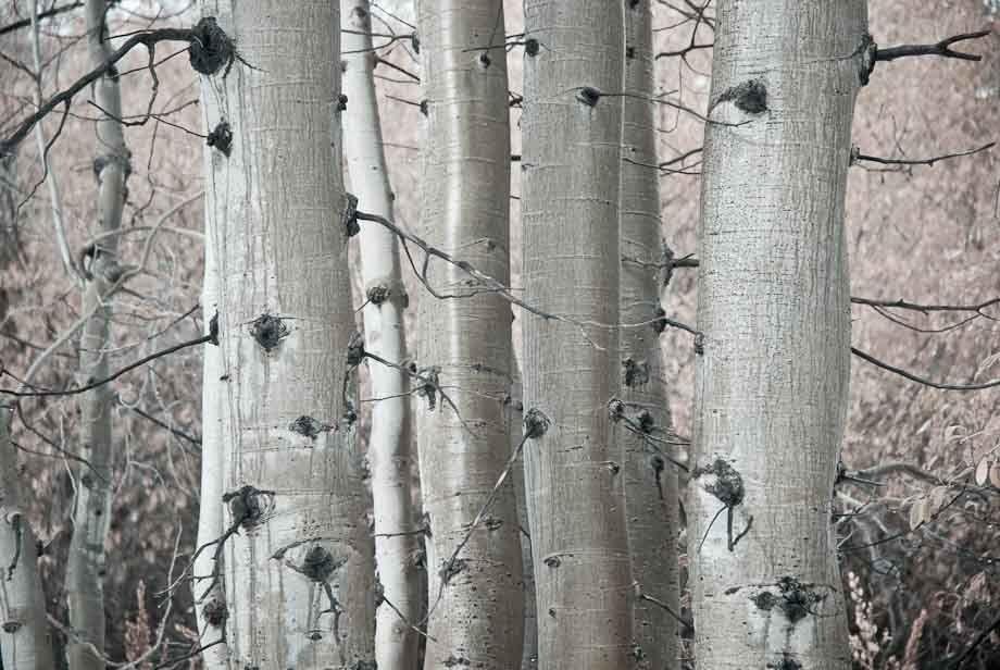November Aspen