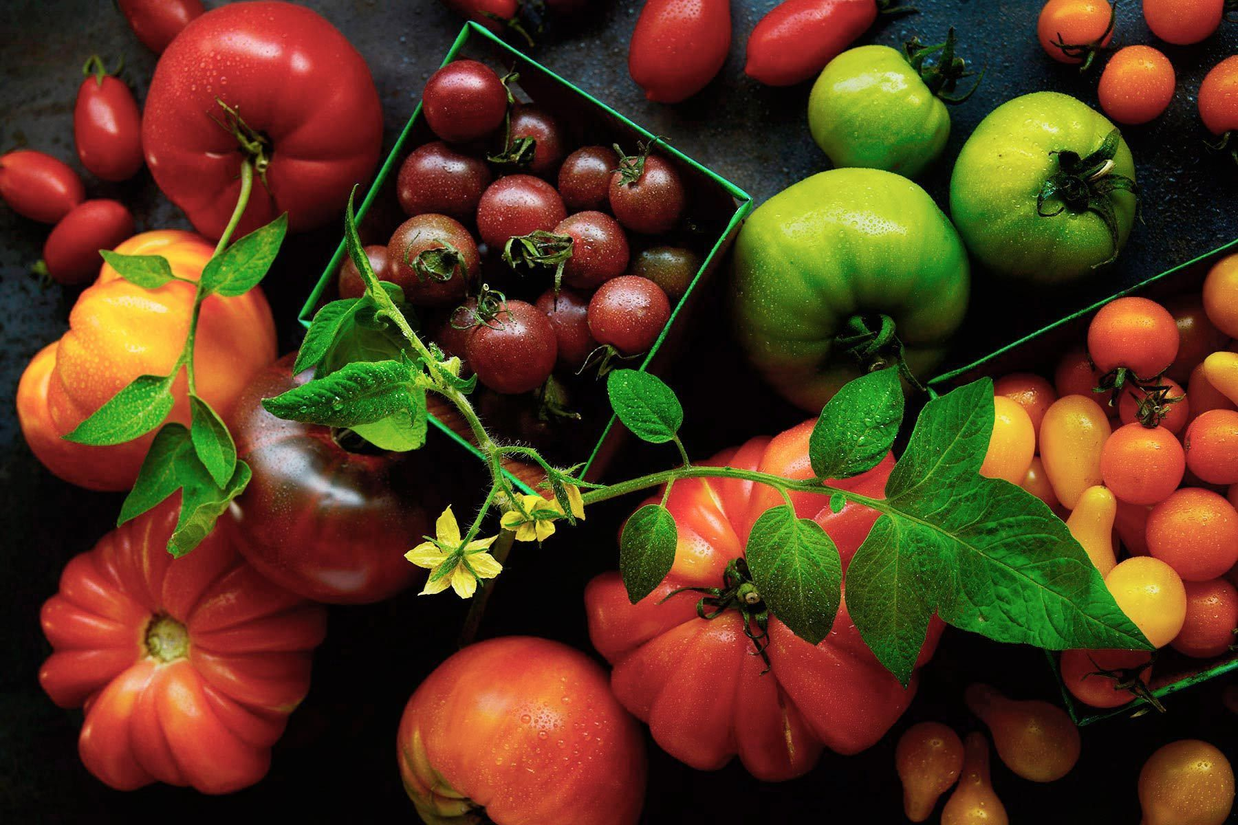 Tomato Varietals