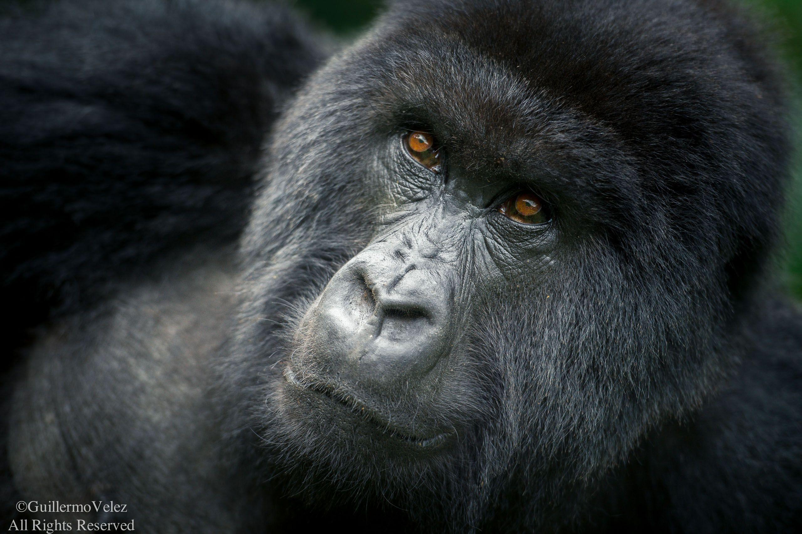 Rwanda-3927.jpg