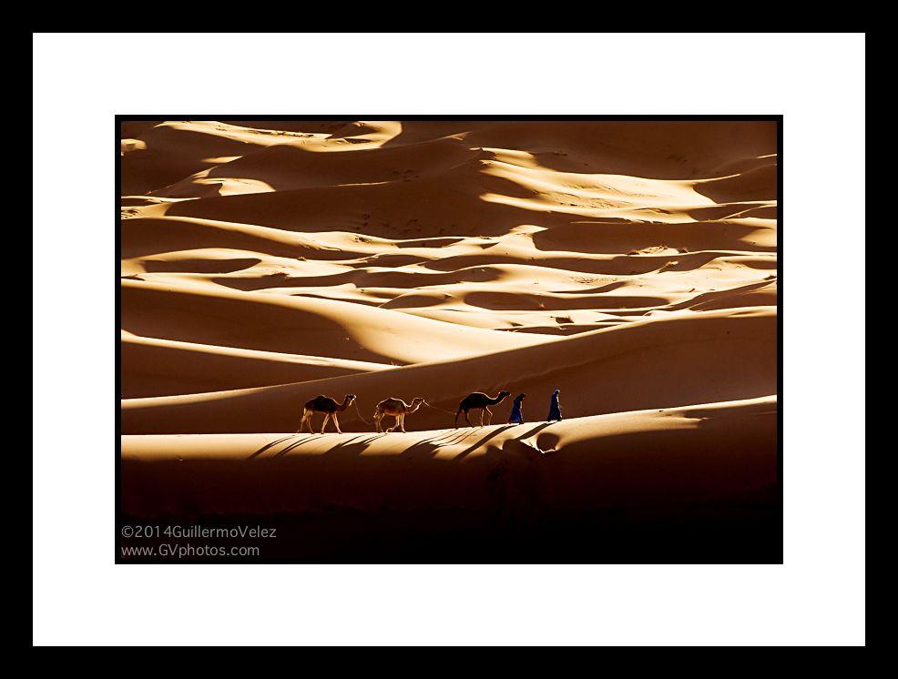 20140403_Camels_0512 copy.jpg