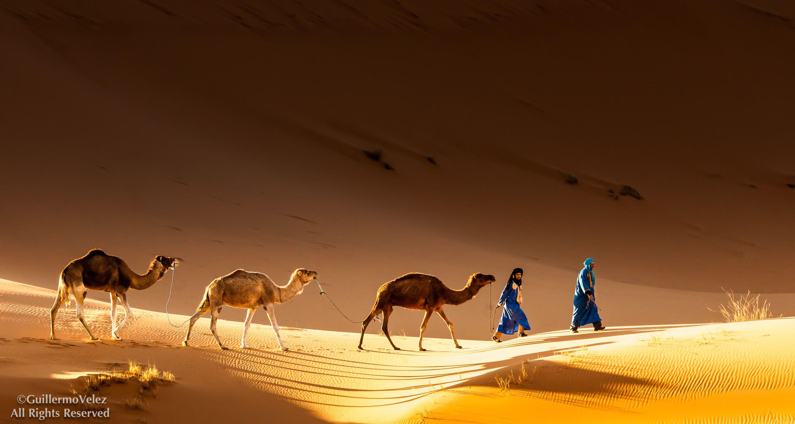 20140403_Camels_0317-Edit.jpg