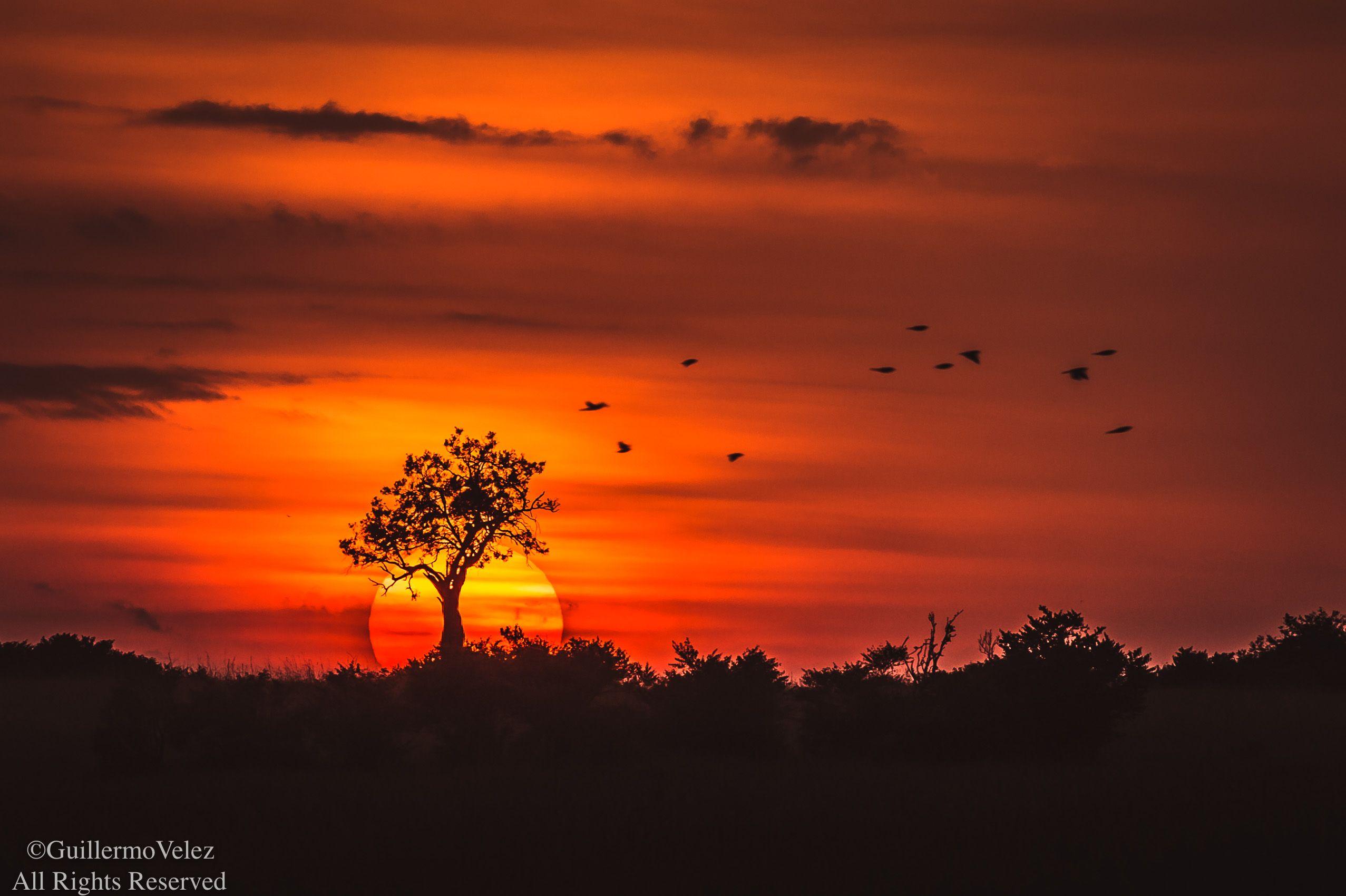 MasaiMara_Sunset-0571.jpg