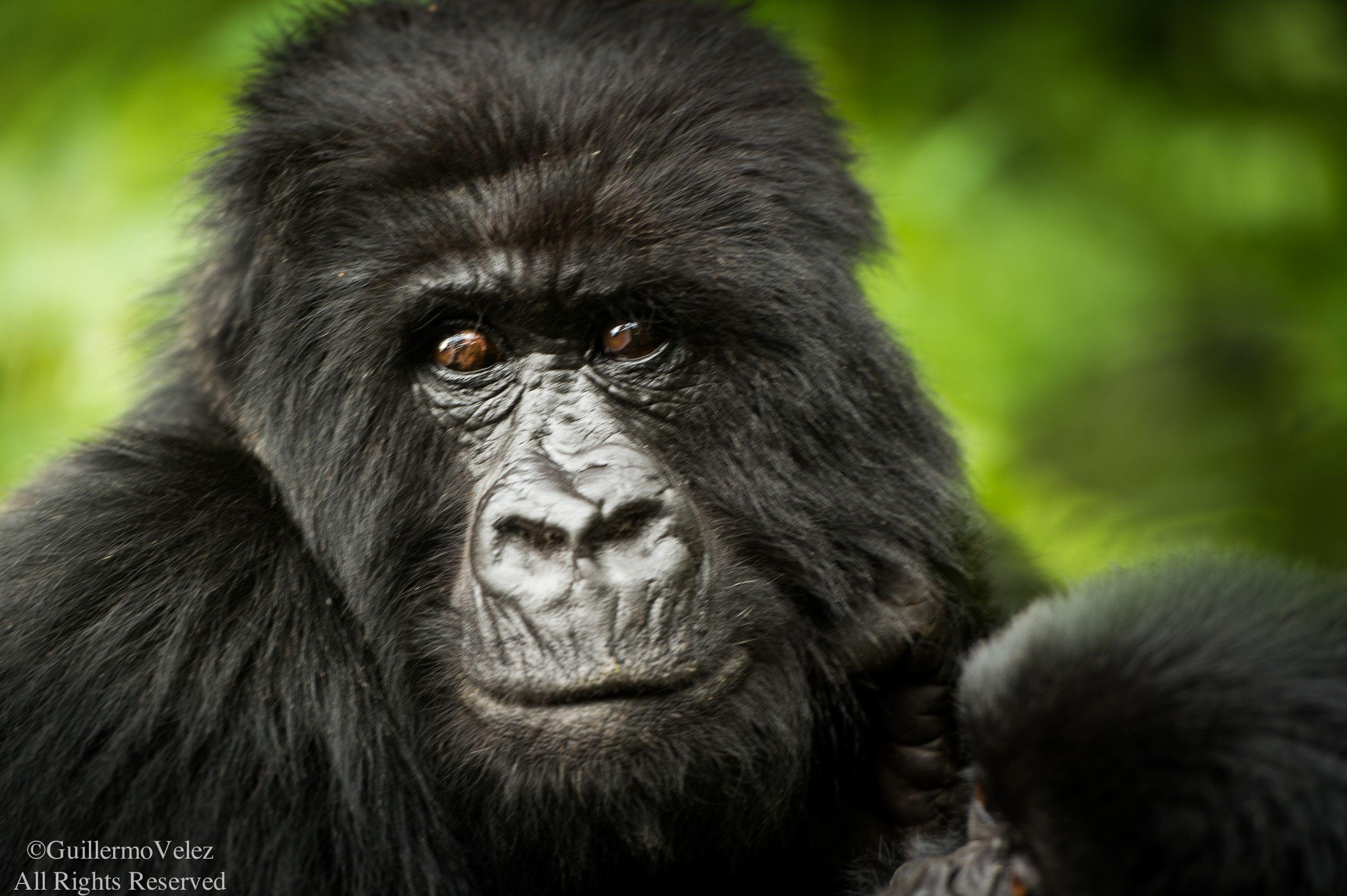 Rwanda-3478.jpg