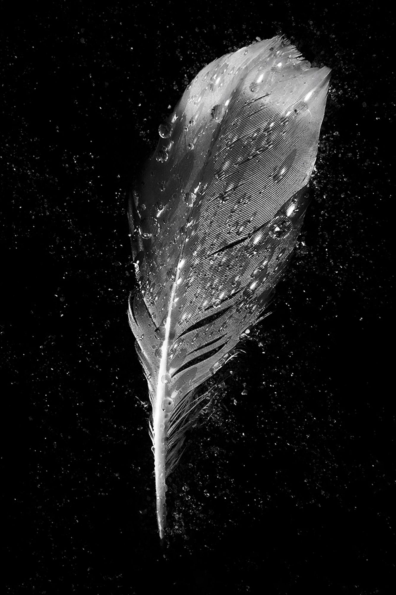 Tiny Immensity #11 - Wet Feather on Beach ©2018 L. Aviva Diamond