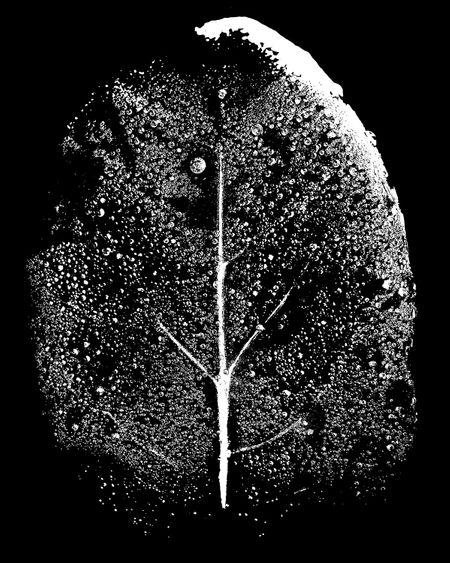 Tiny Immensity #3 - Night Tree/Wet Leaf ©2014 L. Aviva Diamond