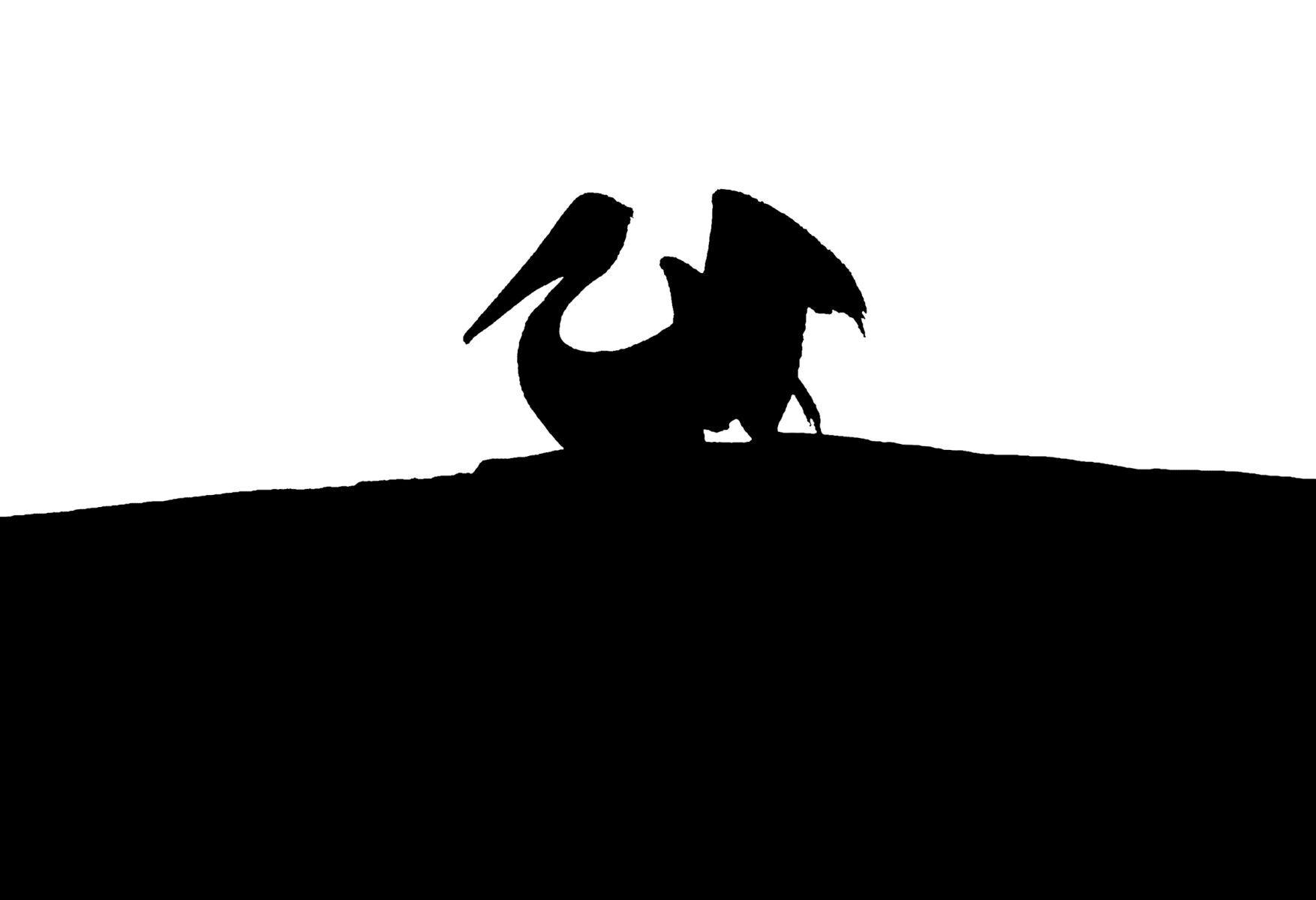 Bird Series #21 - Pelican Dragon ©2015 L. Aviva Diamond