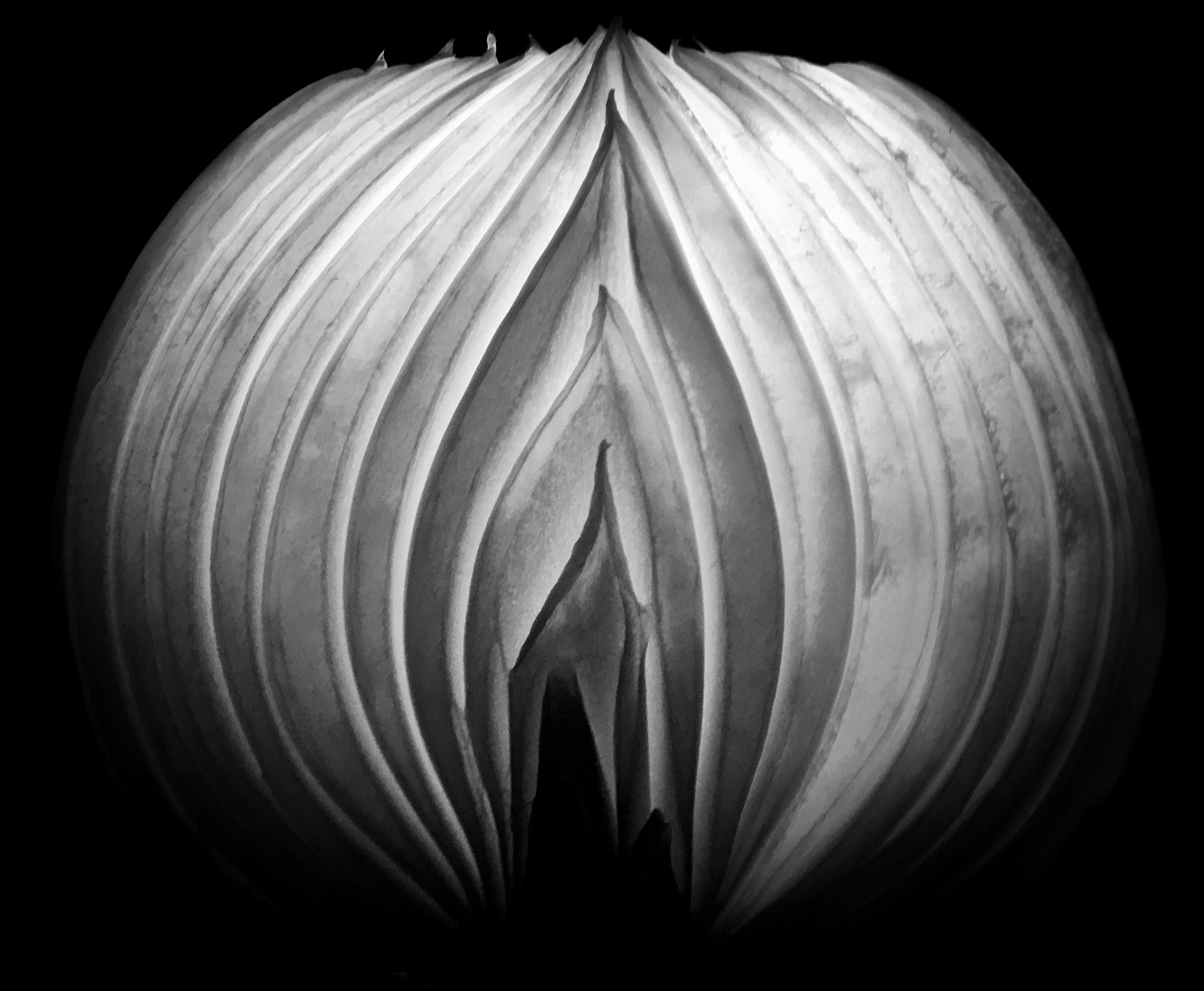 Tiny Immensity #33 - Eternal Flame of the Aging Onion in the Time of Covid ©2020 L. Aviva Diamond