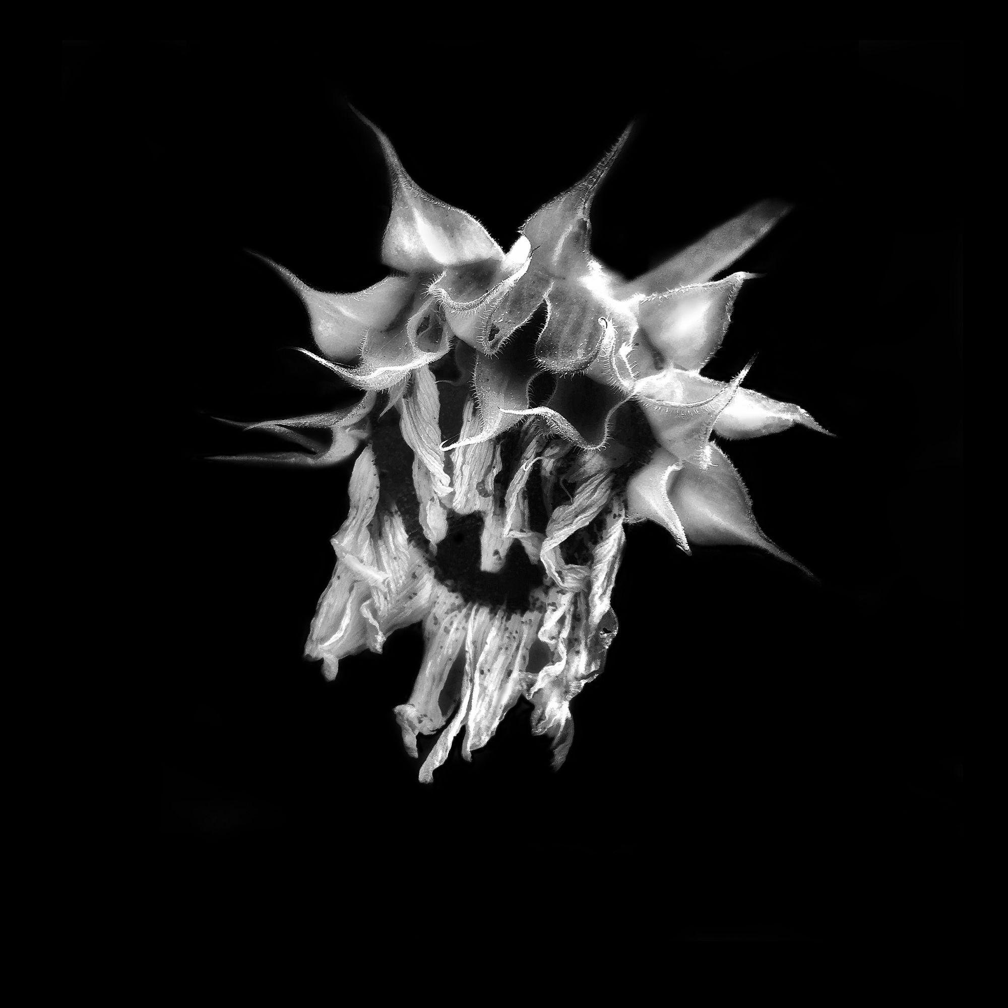 Tiny Immensity #8 - Dying Sunflower ©2017 L. Aviva Diamond