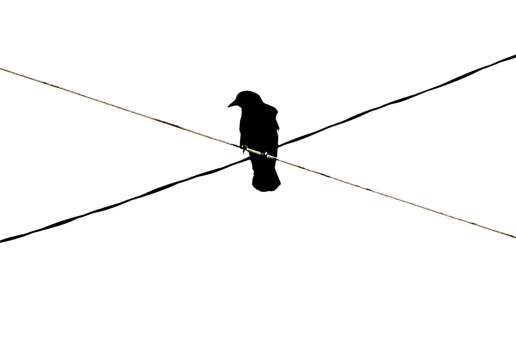 Bird Series #10 - Crossroads ©2012 L. Aviva Diamond