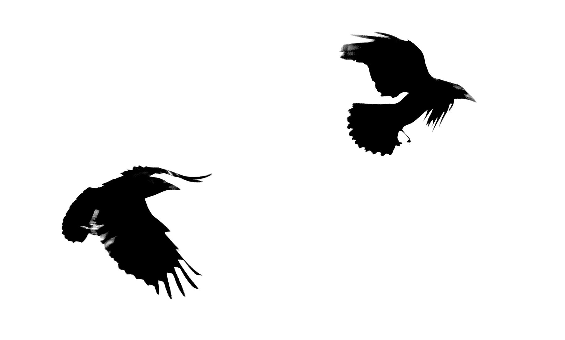 Bird Series #1©2013 L. Aviva Diamond