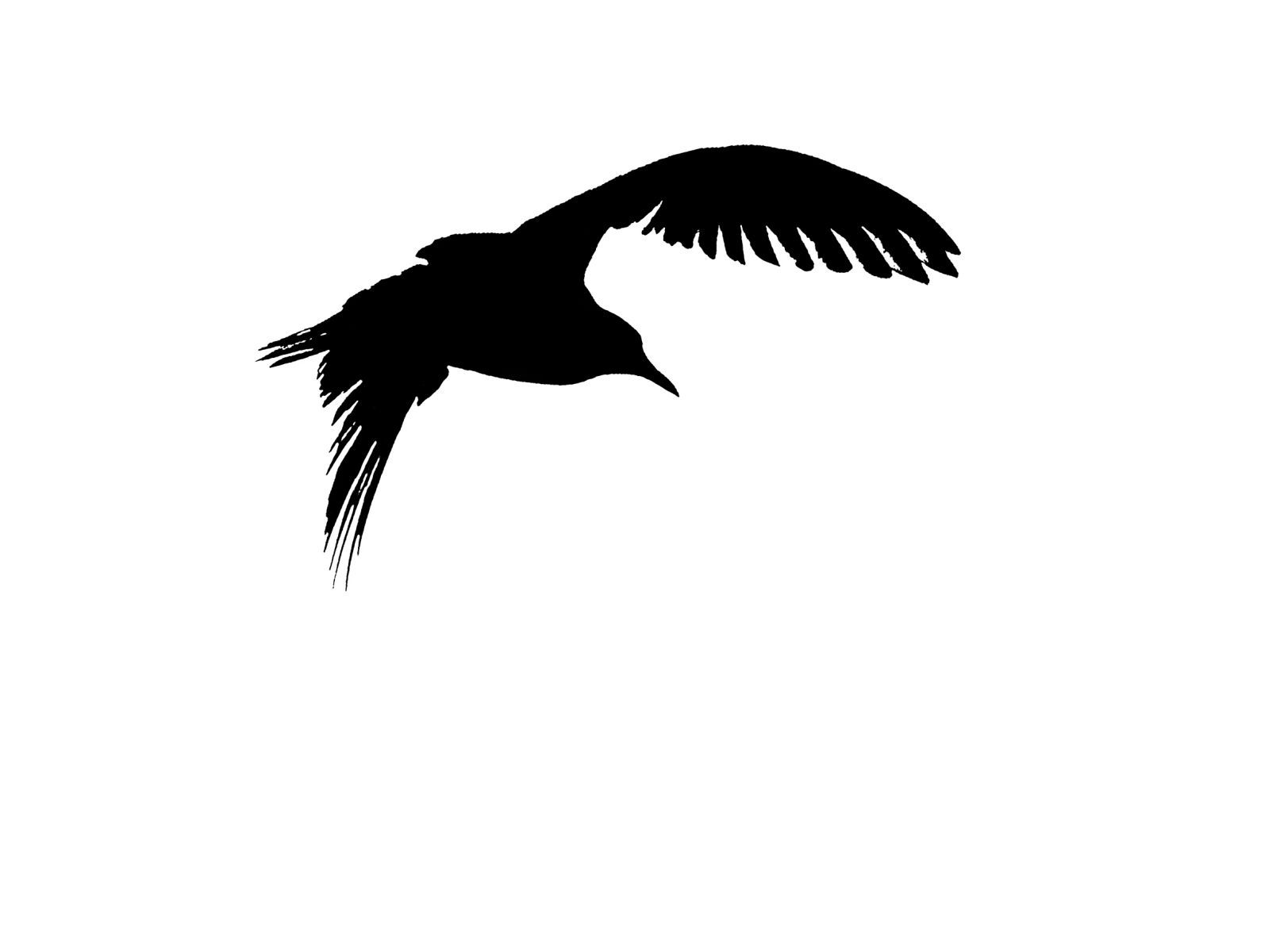 Bird Series #8 ©2013 L. Aviva Diamond