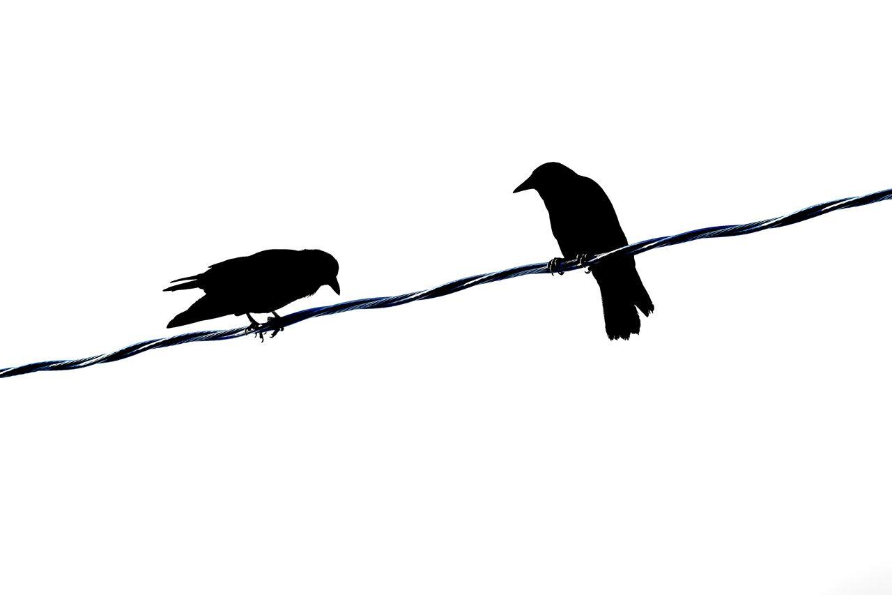 Bird Series #13 - The Bow ©2015 L. Aviva Diamond
