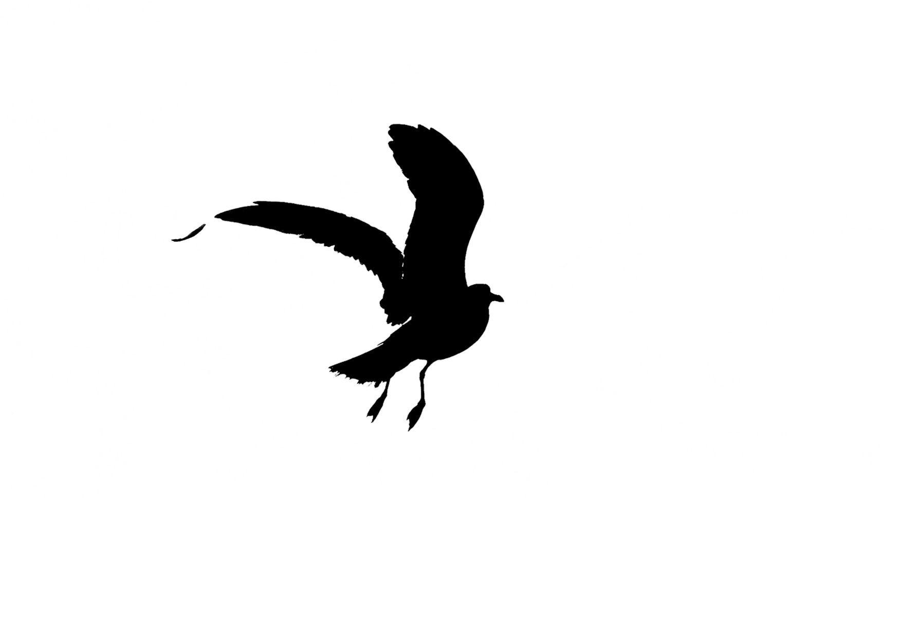 Bird Series #6 - Falling Feather ©2016 L. Aviva Diamond