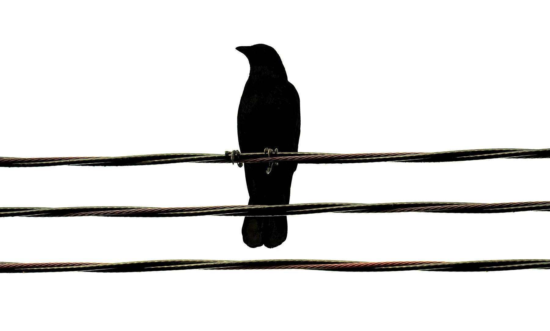 Bird Series #5 - Grasping ©2015 L. Aviva Diamond
