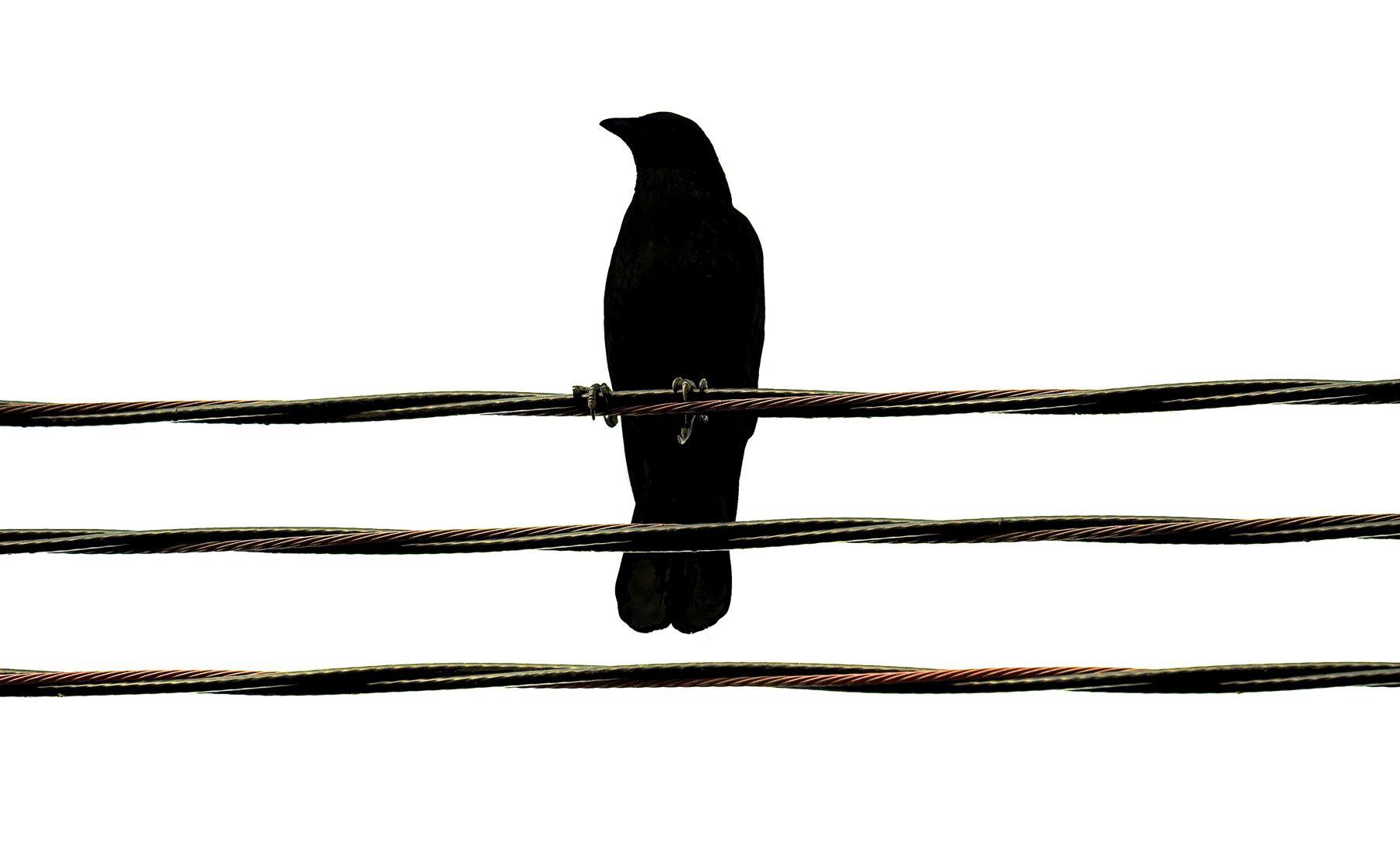 Bird Series #5 - Grasping©2015 L. Aviva Diamond
