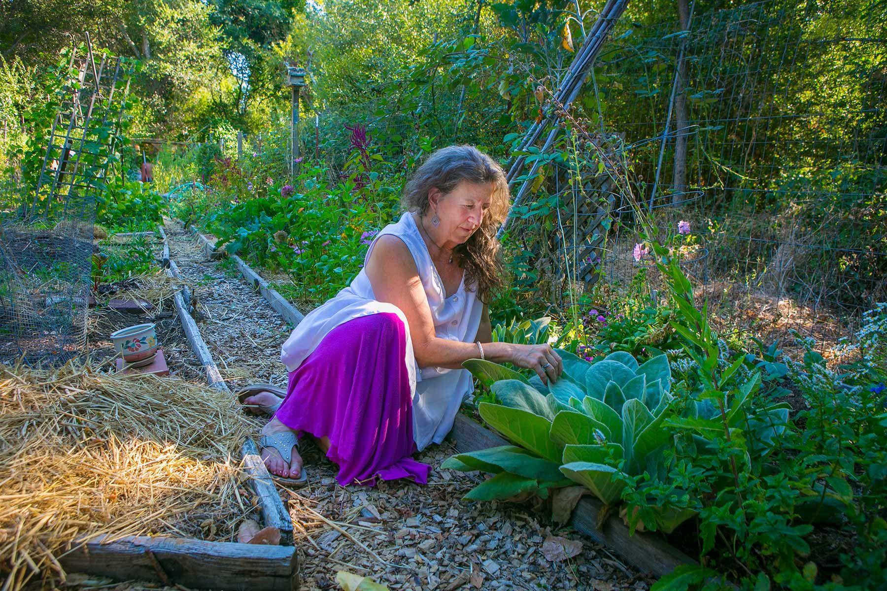Fairfax Community Garden, CA