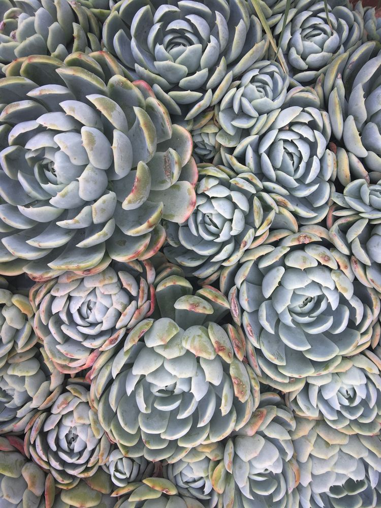 Succulents, Mexico