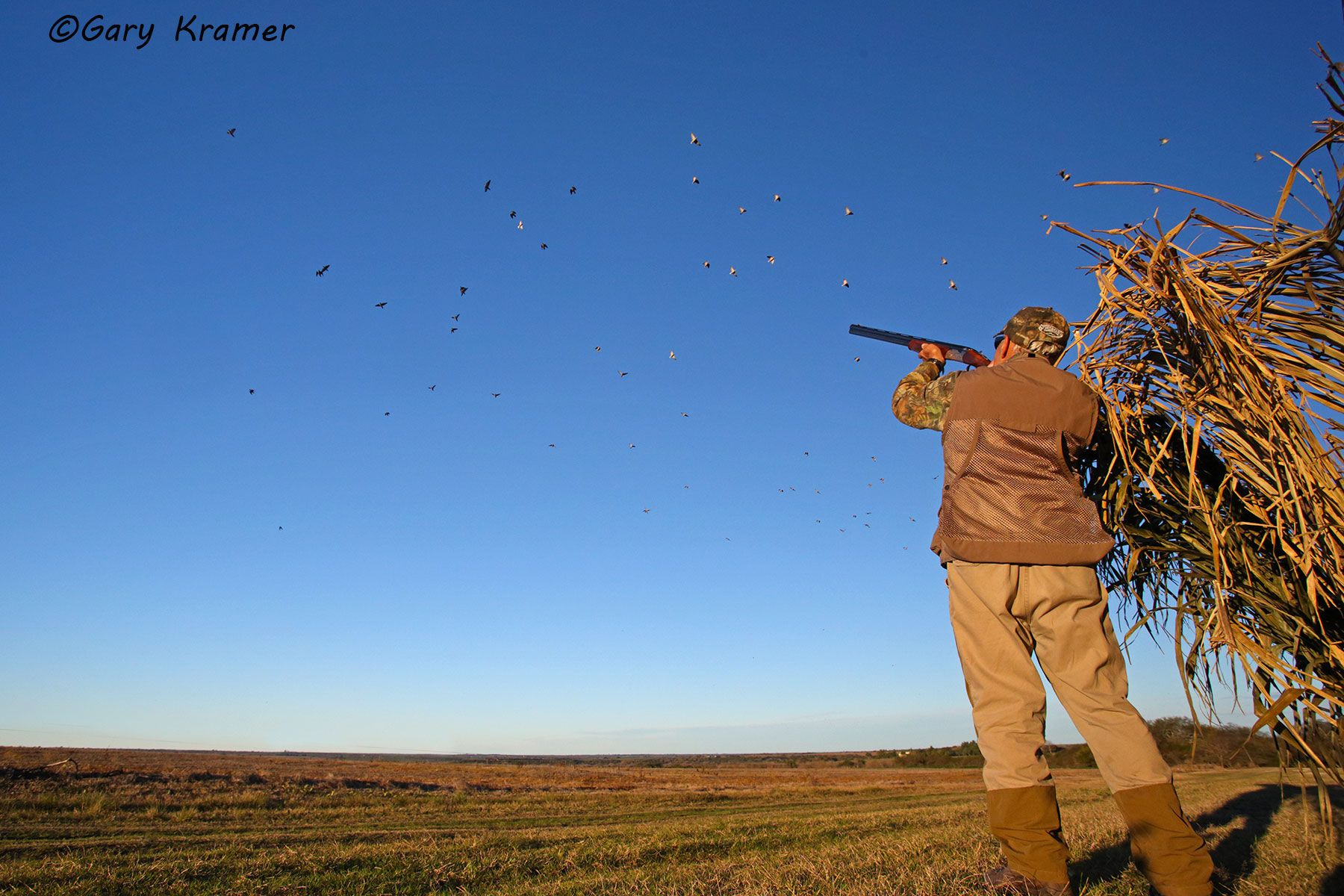 Hunter shooting at Eared Doves, Argentina- SHds#982d