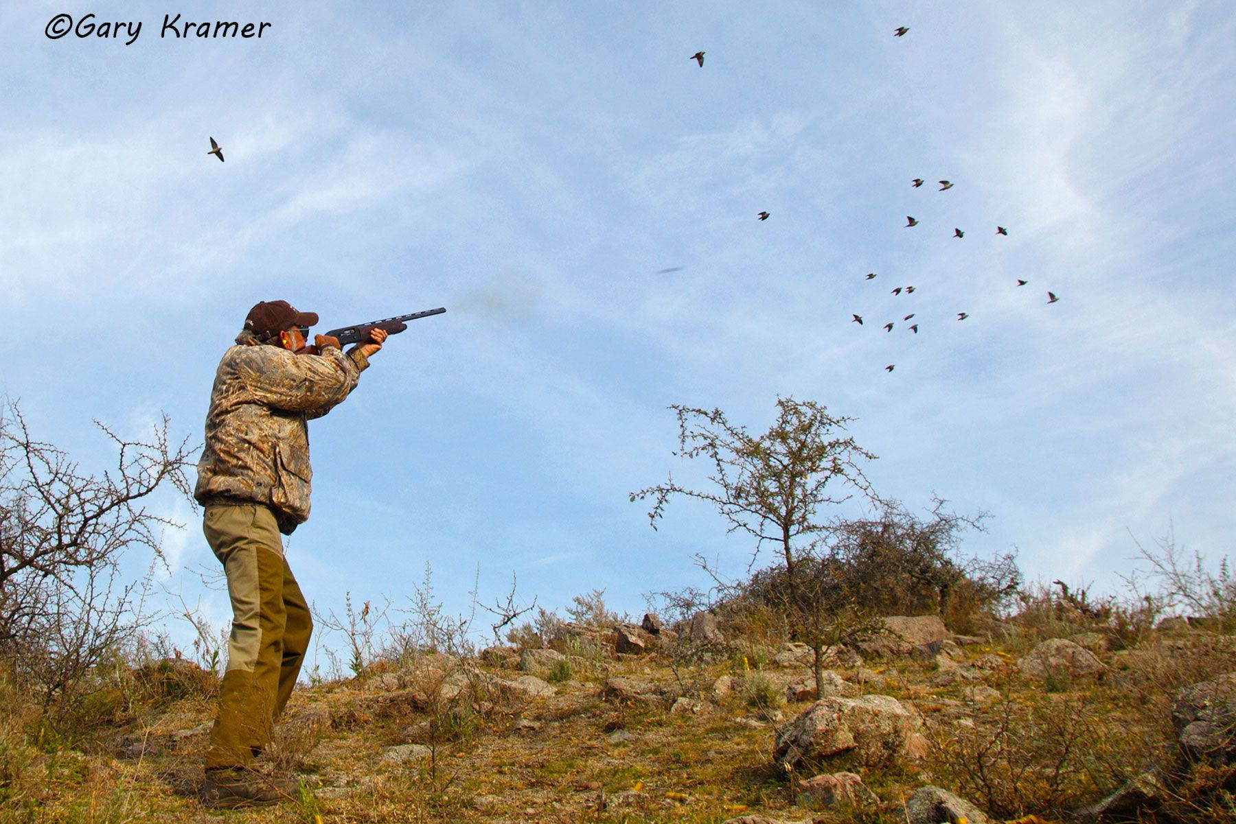 Hunter shooting at Eared Dove, Argentina  - SHdsb#138d
