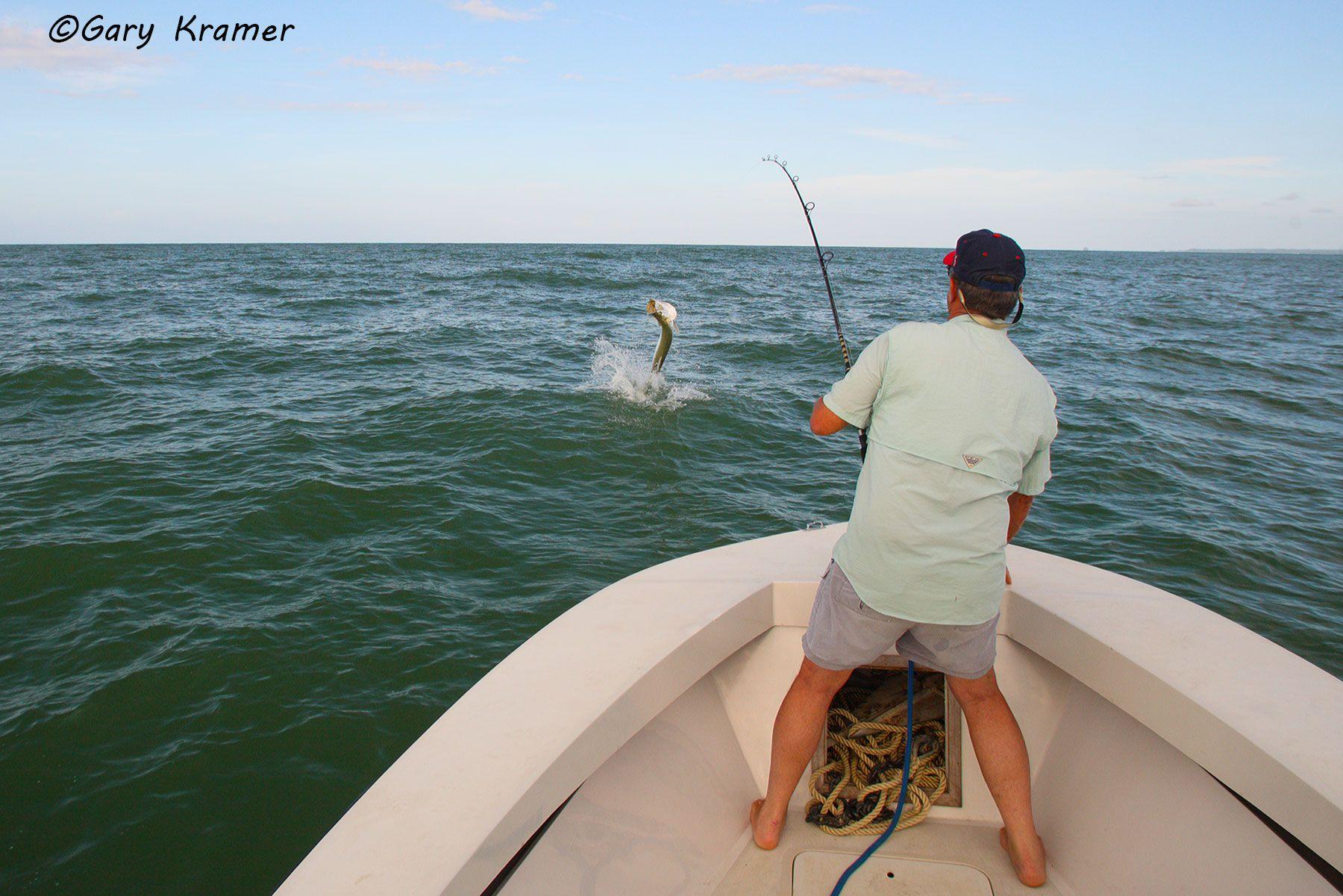 Angler fighting Tarpon, Panama - NFTf#003d