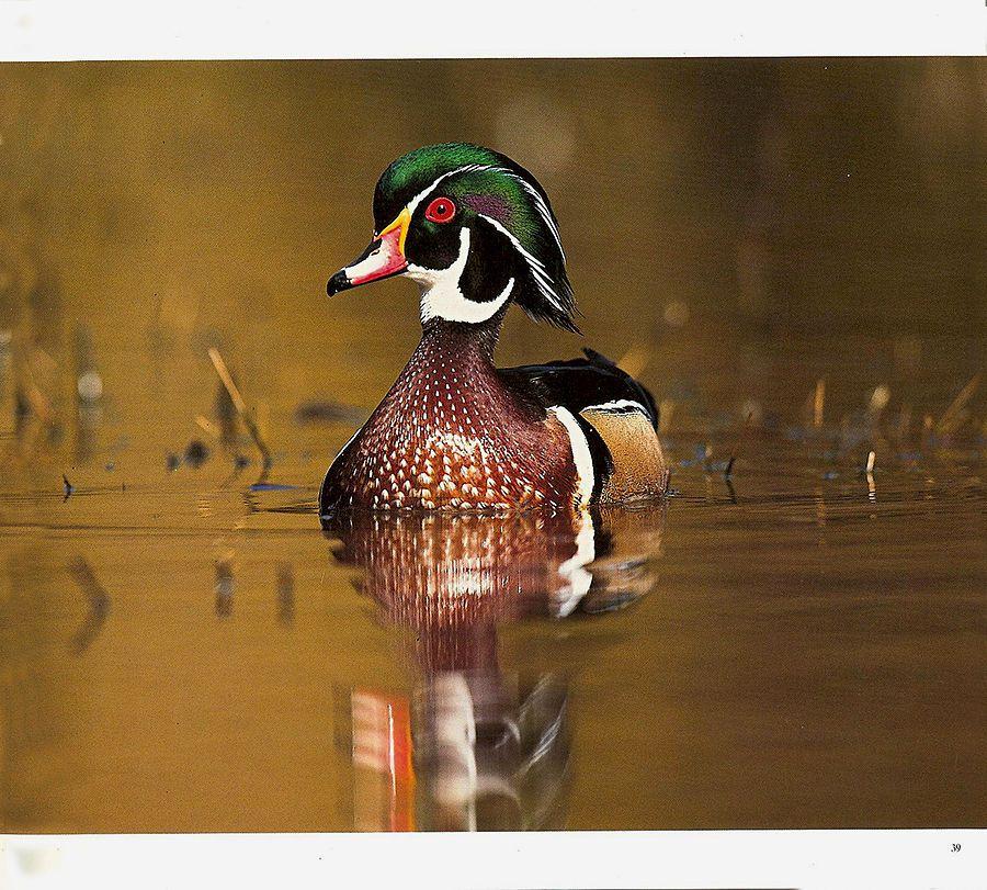 1ca_wildlife___6.jpg
