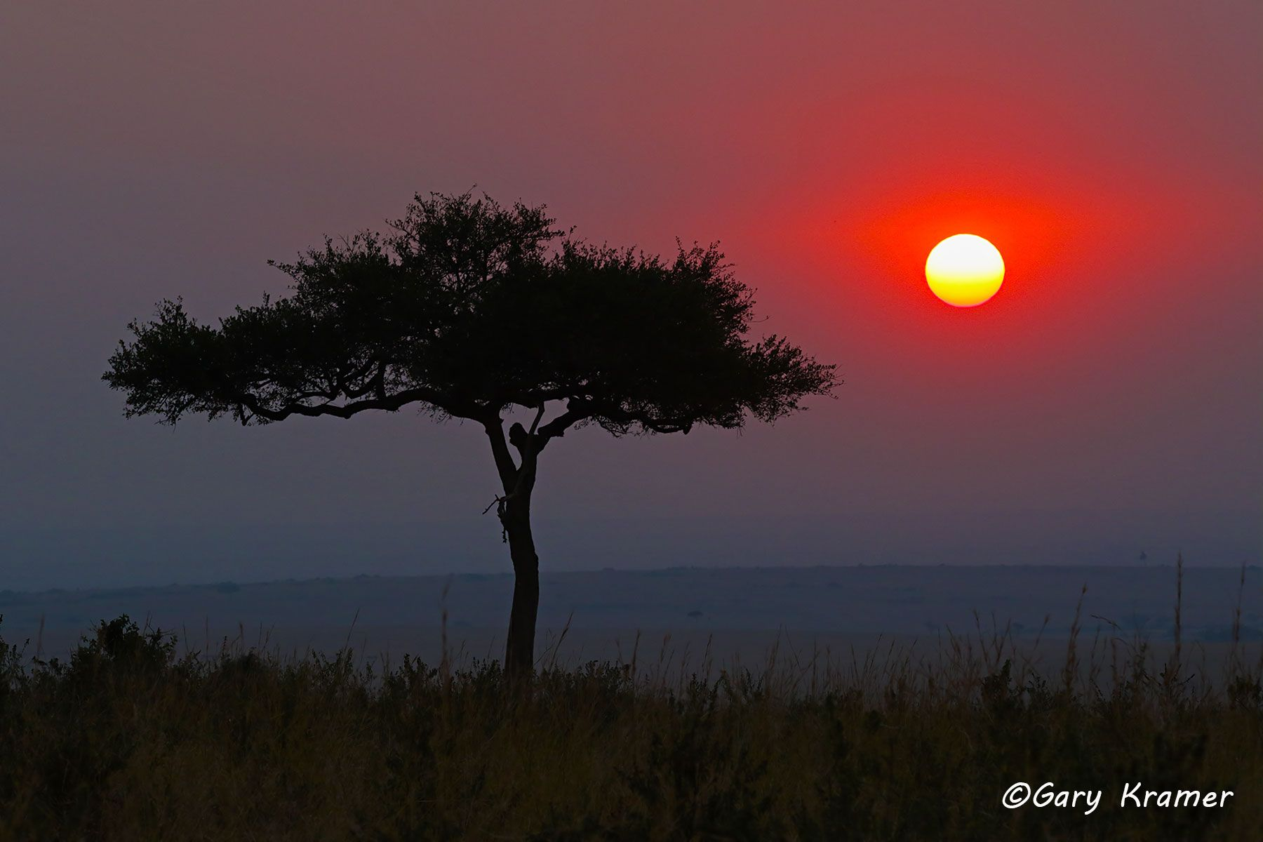 Sunset at Maasai Mara National Reserve, Kenya - ASKus#008d