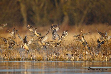 Mixed Flocks