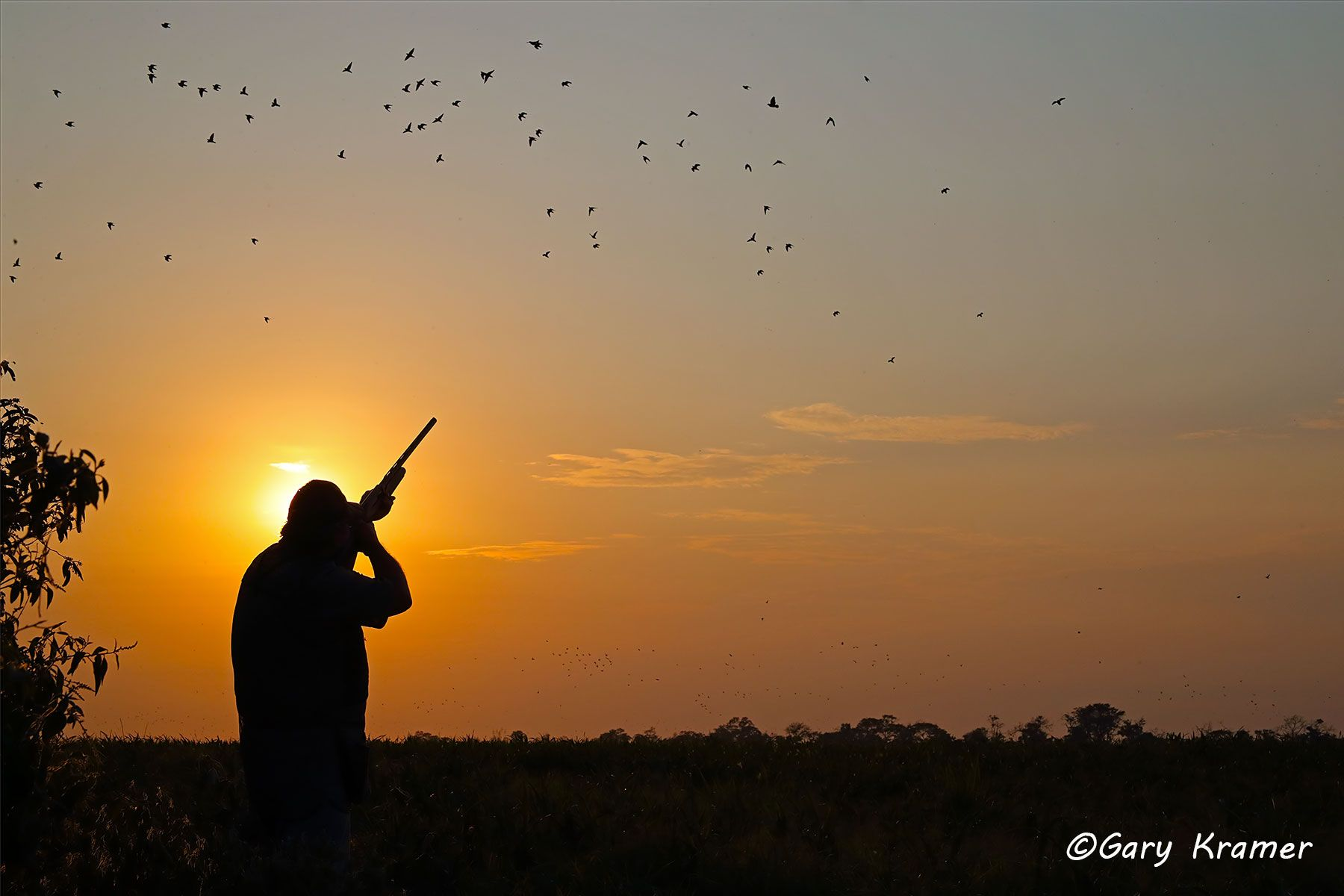 Hunter shooting at Eared Doves at Sunrise/Sunset, Bolivia - SHDess#037d