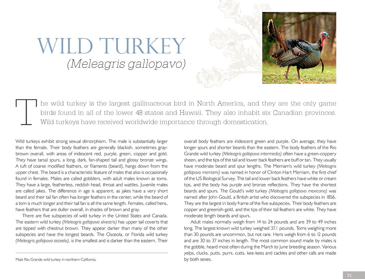 Turkey_Page_1bsm.jpg
