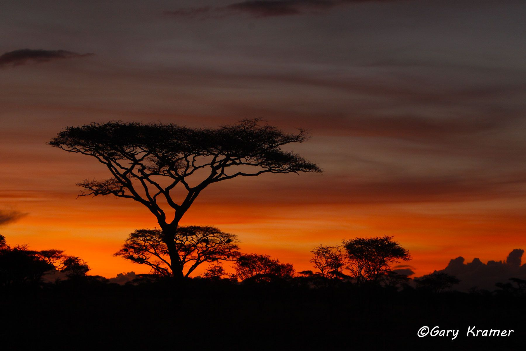 Sunset at Serengeti National Park, Tanzania - ATSs#001d