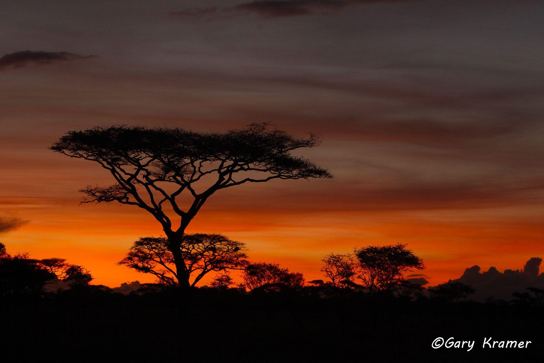 Sunset at Serengeti National Park, Tanzania - ATSs#001d