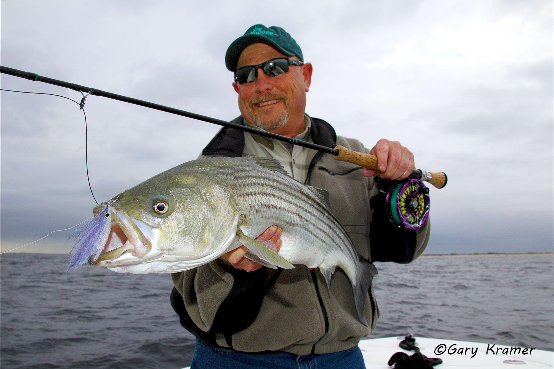 Flyfisherman (Carl Rey) w/Striped Bass - NFSsb#026d