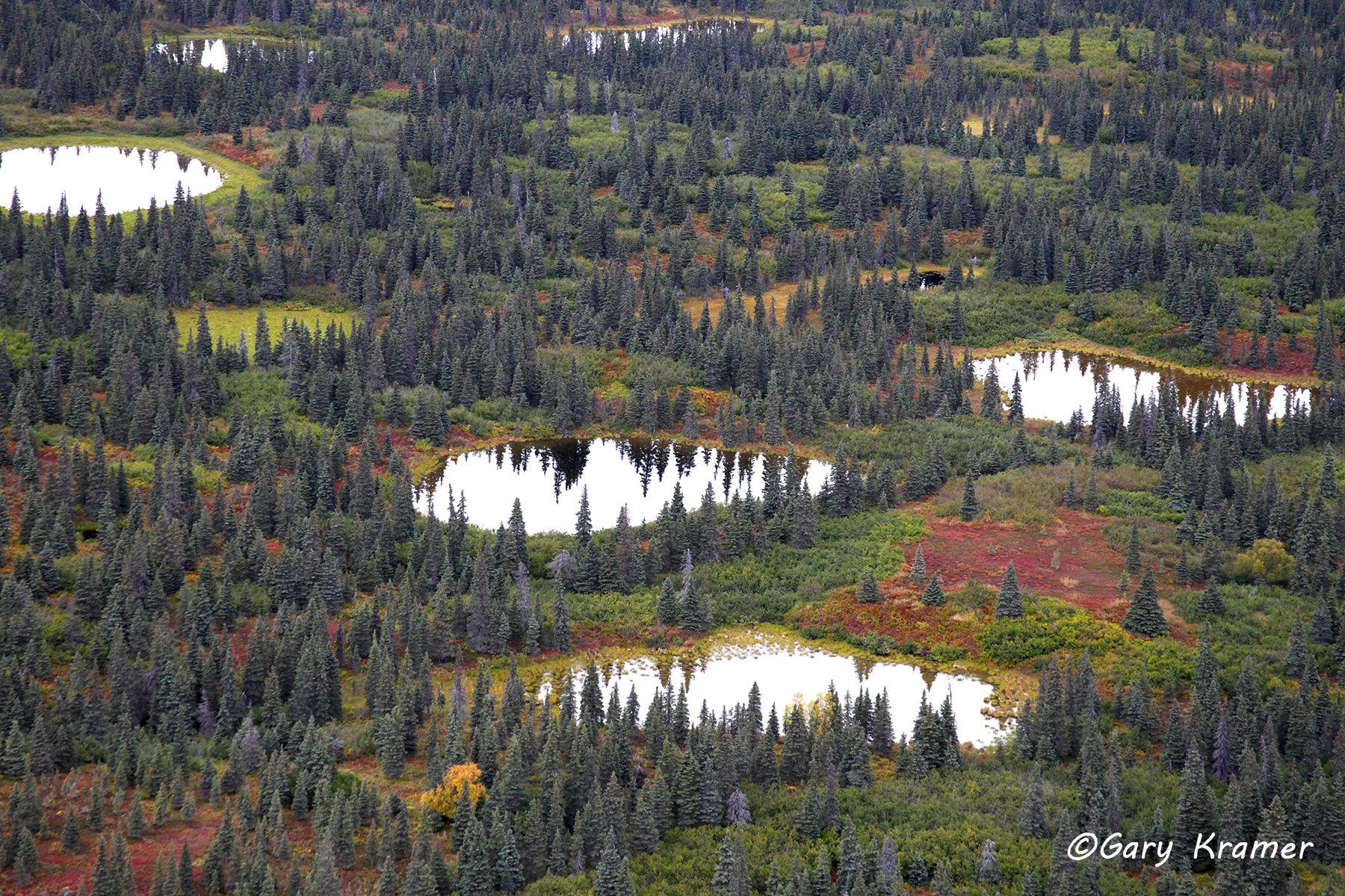 Boreal Forest Wetlands (aerial) Alaska - NSAB#005d