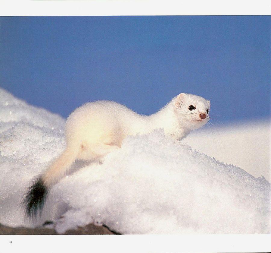 1ca_wildlife___3.jpg