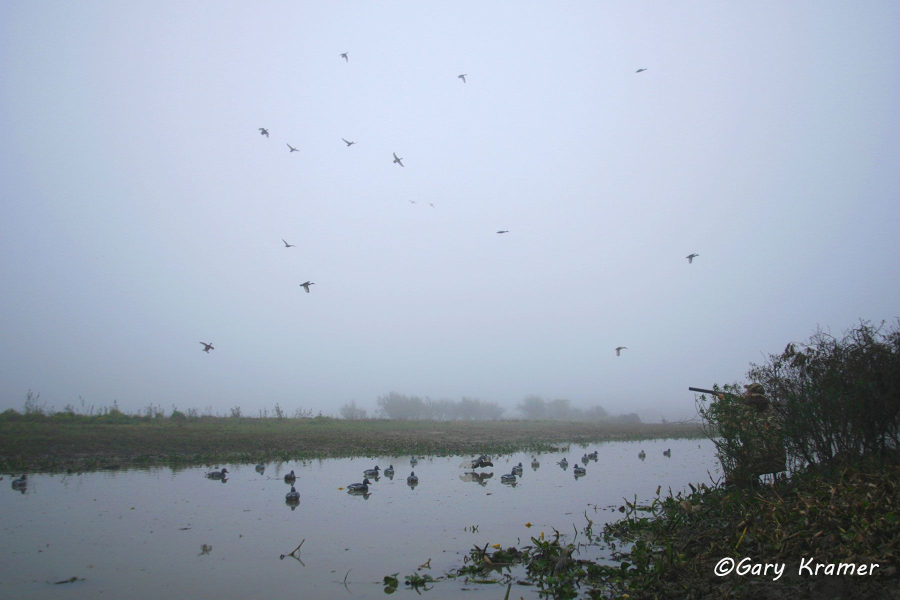 Hunter with ducks over decoys, Argentina - SHDa#076d