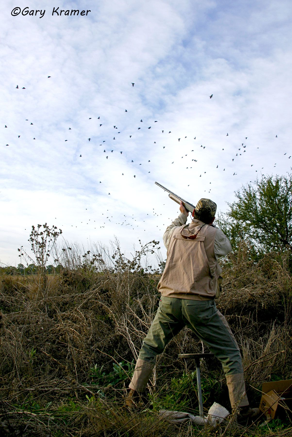 Hunter shooting at Eared Dove, Argentina - SHds#025d
