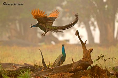 Other Wildlife