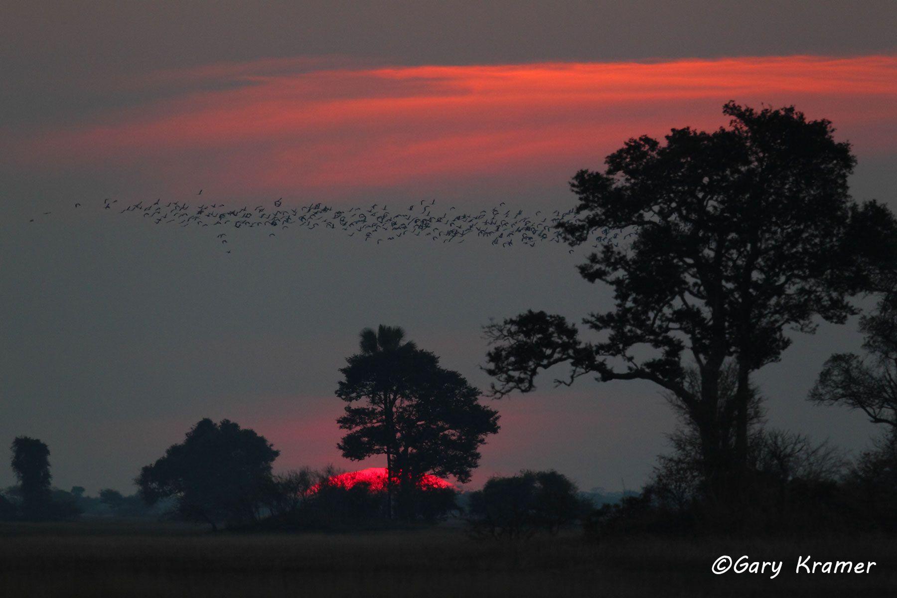 Sunset at Kafue National Park, Zambia - ASSK#031d