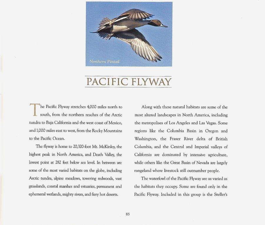 1flyways___06.jpg