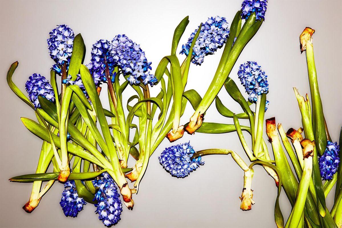 1springflowers063_crop