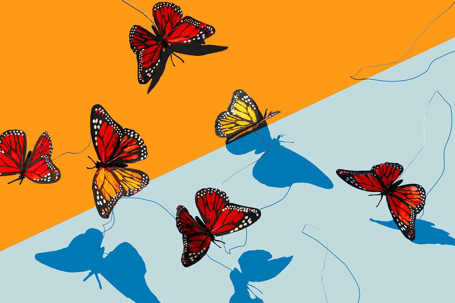1leftovers_butterflies_1